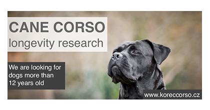 Korec Corso – Cane Corso Italiano Kennel