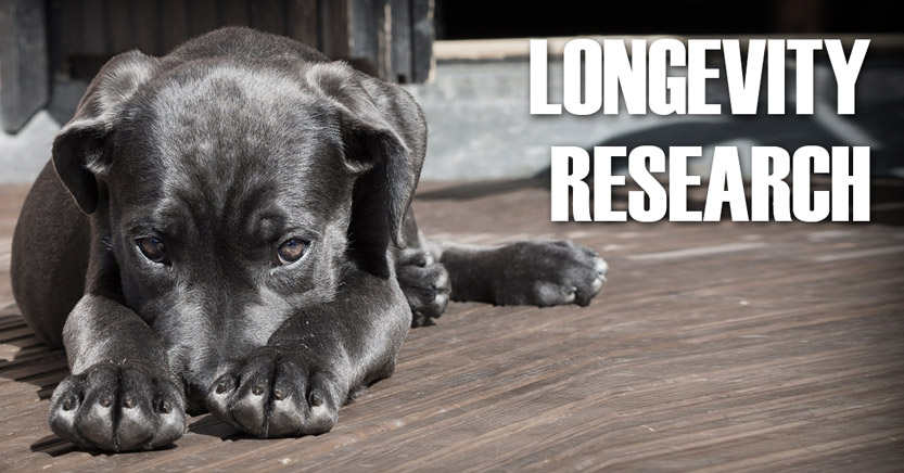 Longevity research